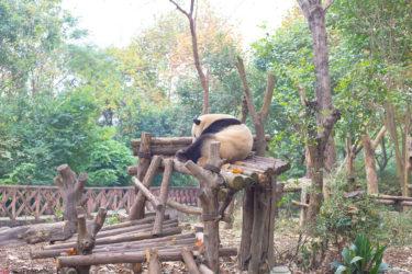 【中国・成都】ハードコアな旅しすぎて気が抜けたらしい。一枚もいい写真がない中国最後の都市、成都の一日。